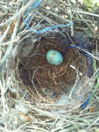 Robin Egg??